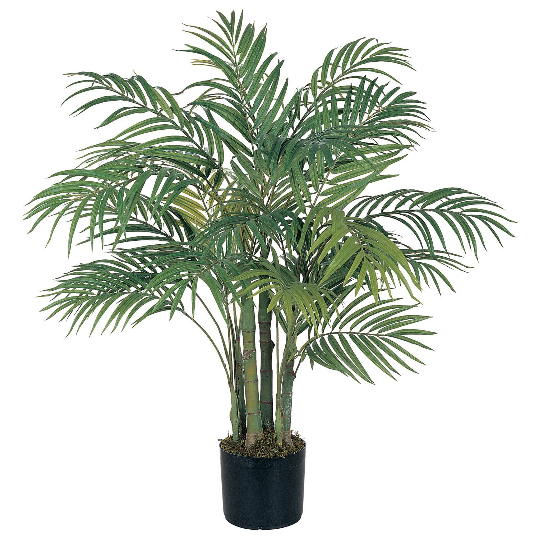 Комнатные цветы как пальма название фото